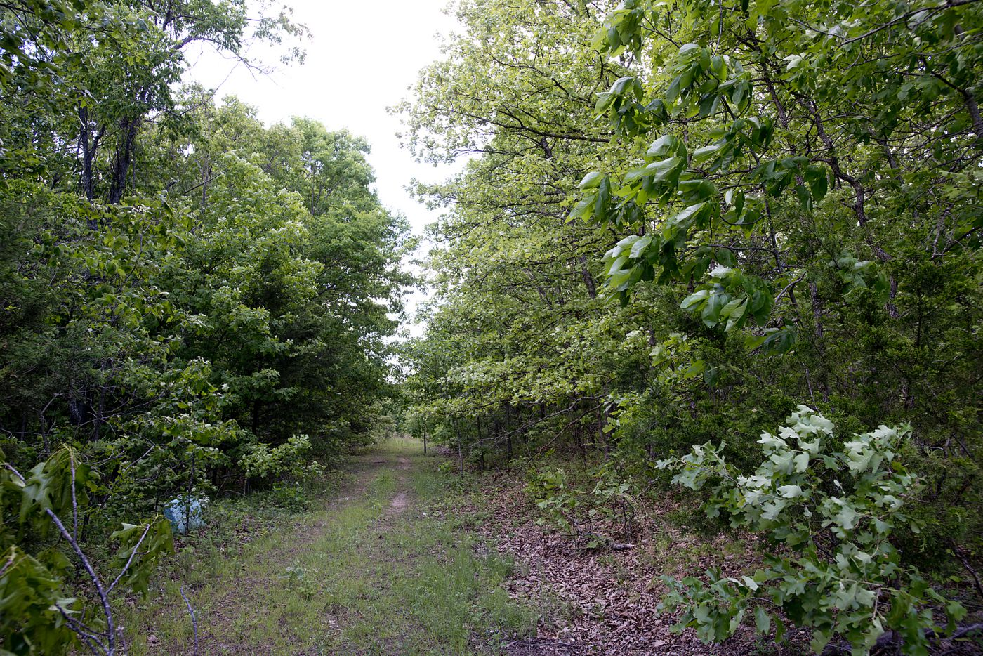 Sold 5 Acres In Morgan County Mo Three Land Guys