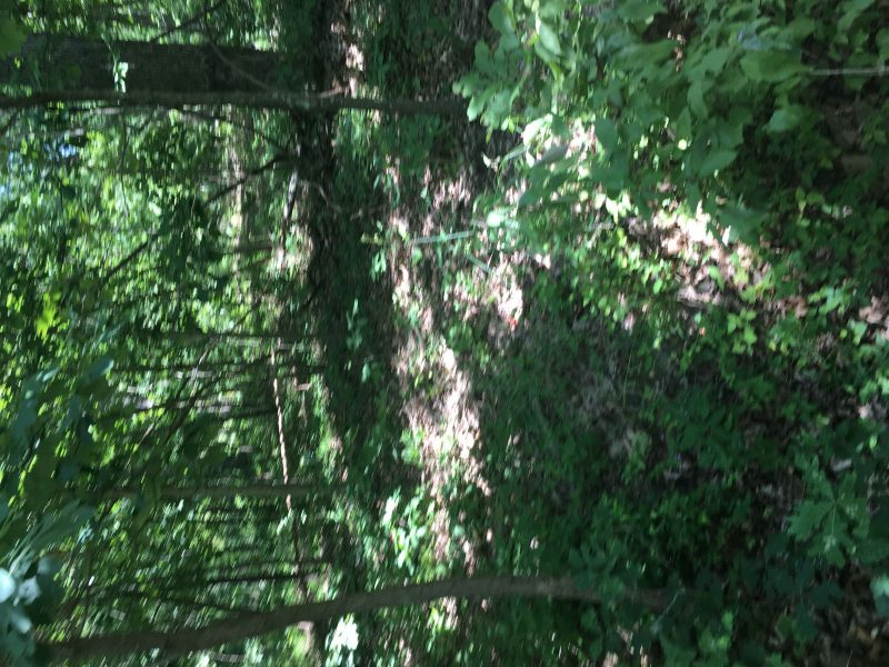 4.1 Acres on Ivy Bend Rd (1)
